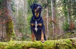 veganes-hundefutter-tierbedarf-262