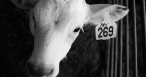 Was bedeutet 269? Hintergründe & Infos zum Kalb 269