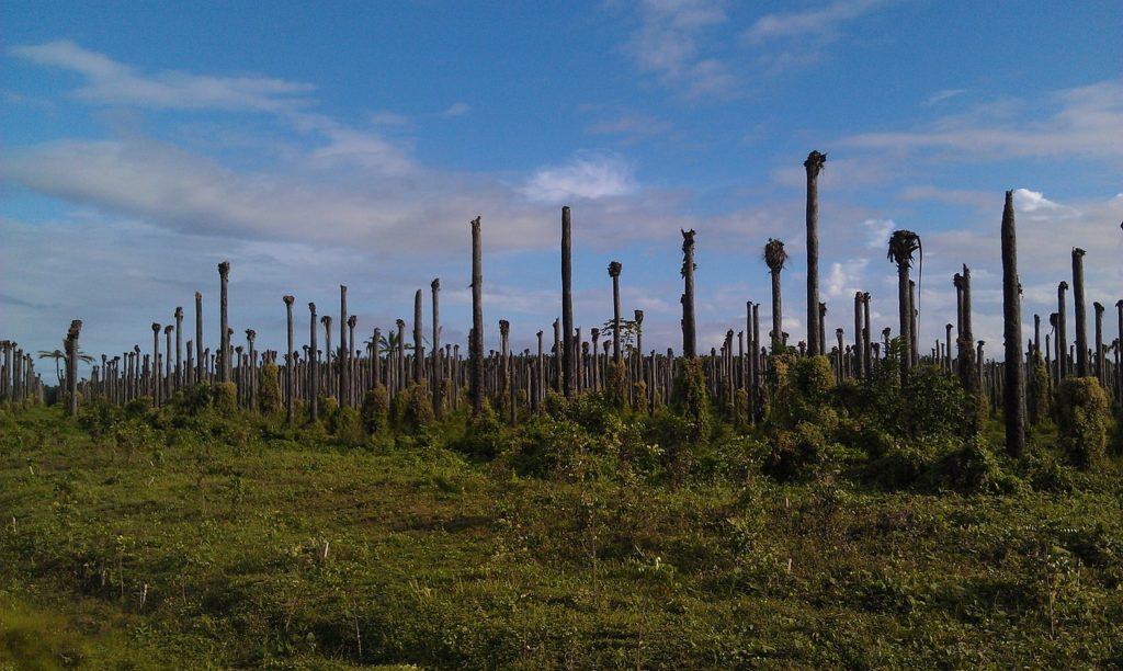 Palmöl-Plantagen und die Auswirkungen auf die Umwelt