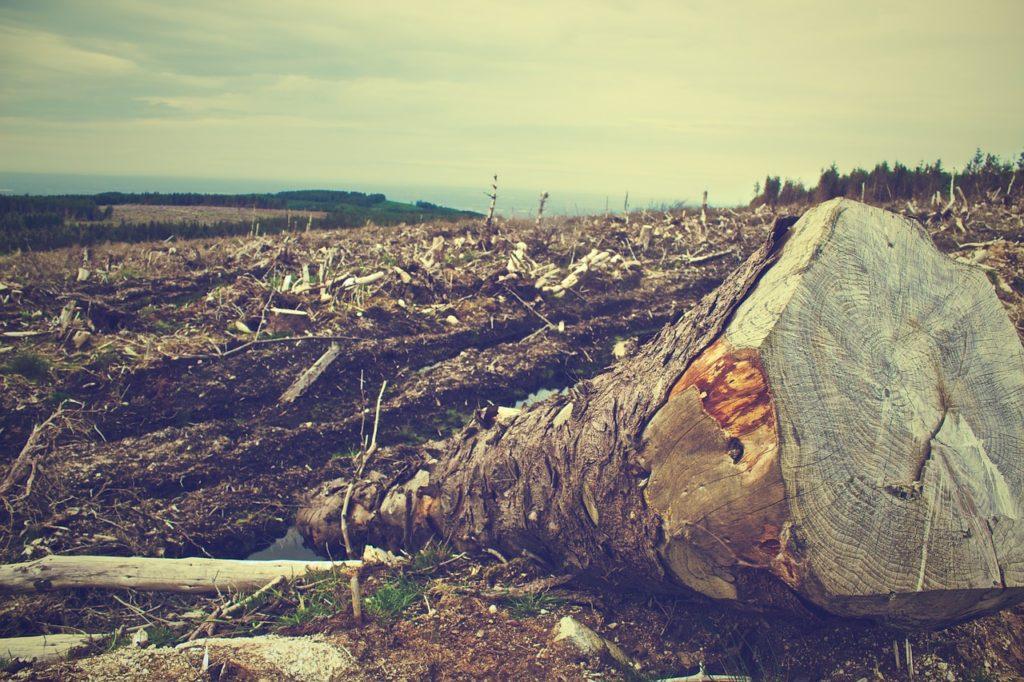 Palmöl und die Umweltauswirkung
