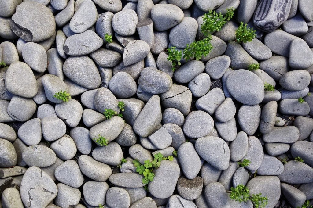 Veganer essen Steine und Gras